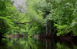 Mystical Withlacoochee River Photo Selected For 75th Annivarsary Commemorative Calender For Florida Division Of Forestry