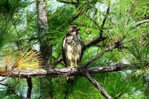 Barbara Bowen Wins 4th Qtr Photo Contest For Florida Division Of Forestry